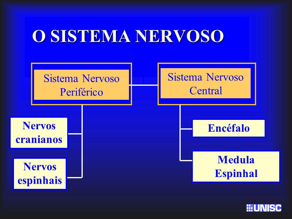O SISTEMA NERVOSO Sistema Nervoso Periférico Sistema Nervoso Central Encéfalo Medula Espinhal Nervos cranianos Nervos espinhais