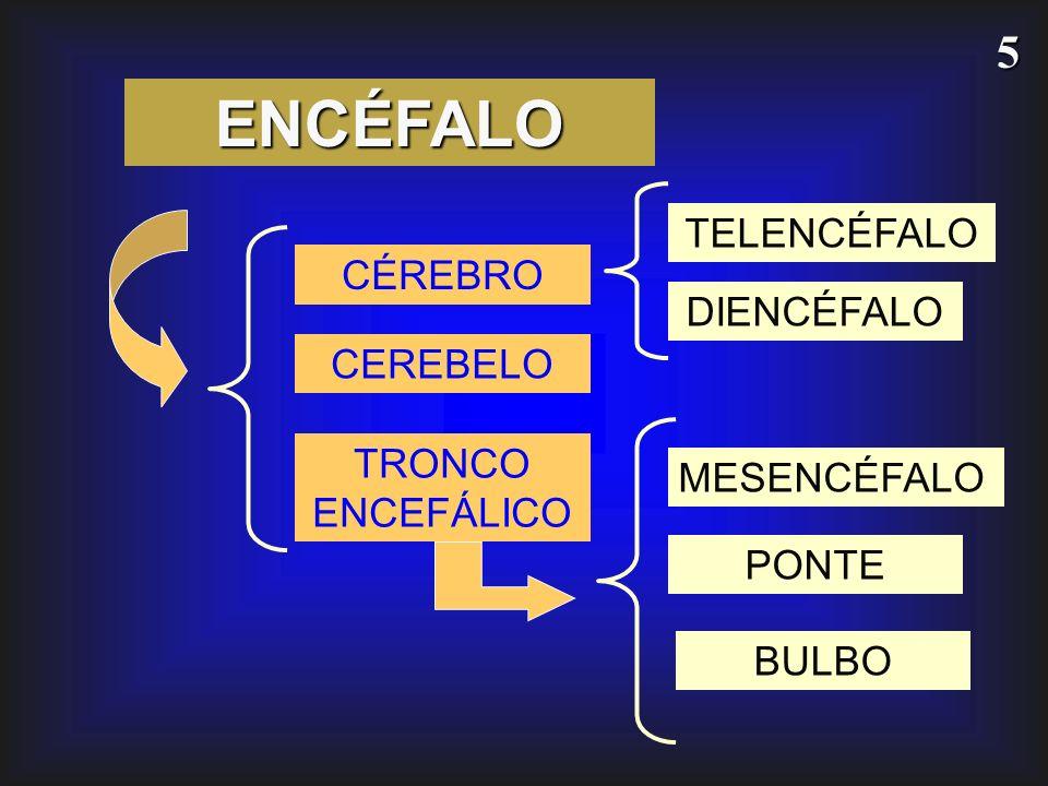 5 ENCÉFALO CÉREBRO CEREBELO TRONCO ENCEFÁLICO MESENCÉFALO PONTE BULBO TELENCÉFALO DIENCÉFALO