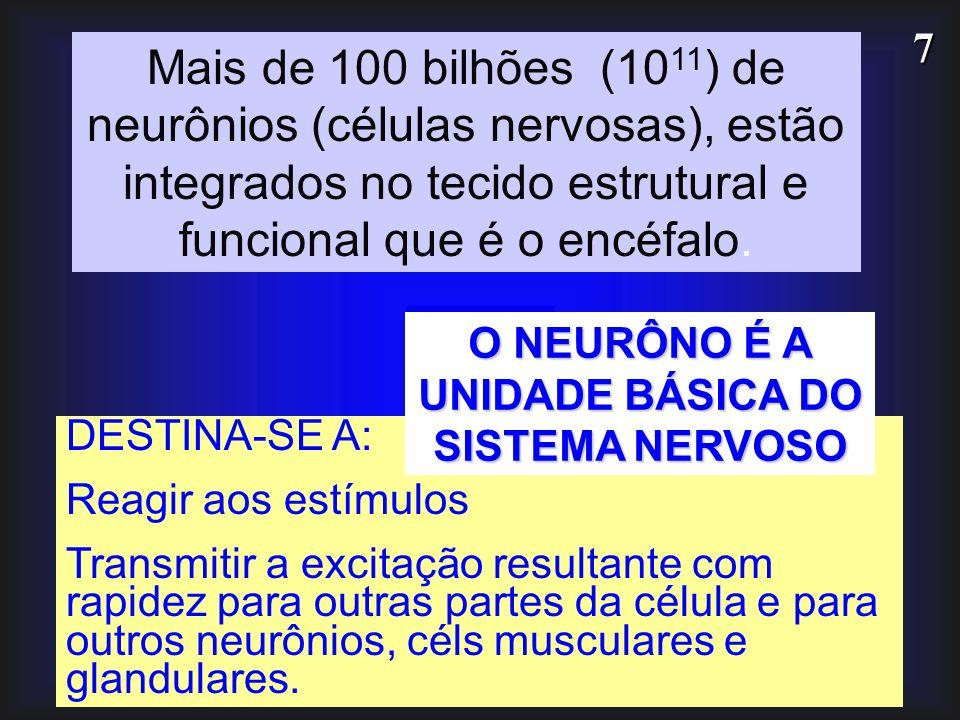 7 DESTINA-SE A: Reagir aos estímulos Transmitir a excitação resultante com rapidez para outras partes da célula e para outros neurônios, céls muscular