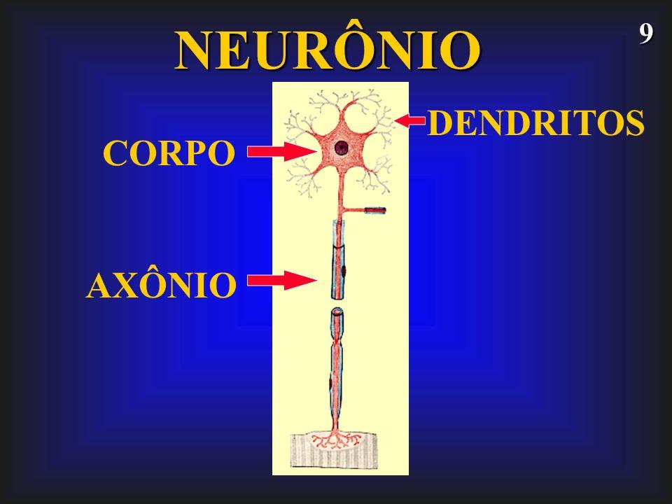 9NEURÔNIO CORPO DENDRITOS