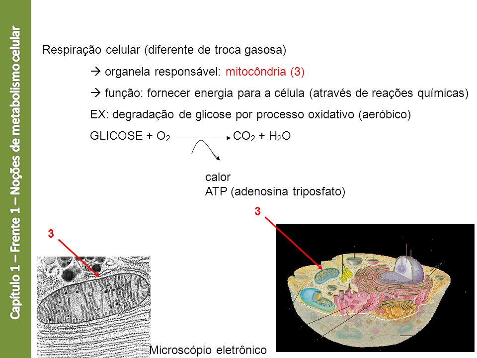 Respiração celular (diferente de troca gasosa) organela responsável: mitocôndria (3) função: fornecer energia para a célula (através de reações químic