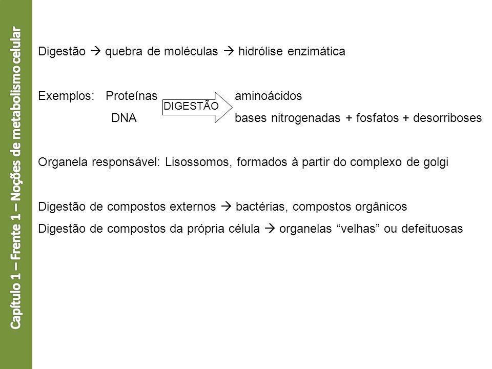 Digestão quebra de moléculas hidrólise enzimática Exemplos: Proteínas aminoácidos DNAbases nitrogenadas + fosfatos + desorriboses Organela responsável