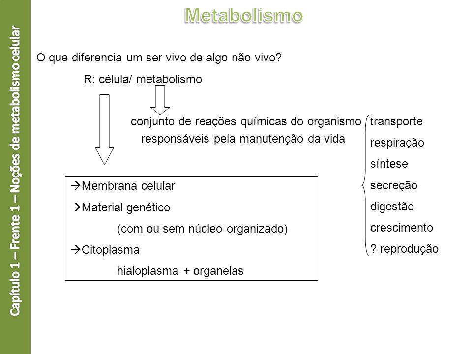 O que diferencia um ser vivo de algo não vivo? R: célula/ metabolismo conjunto de reações químicas do organismo transporte respiração síntese secreção