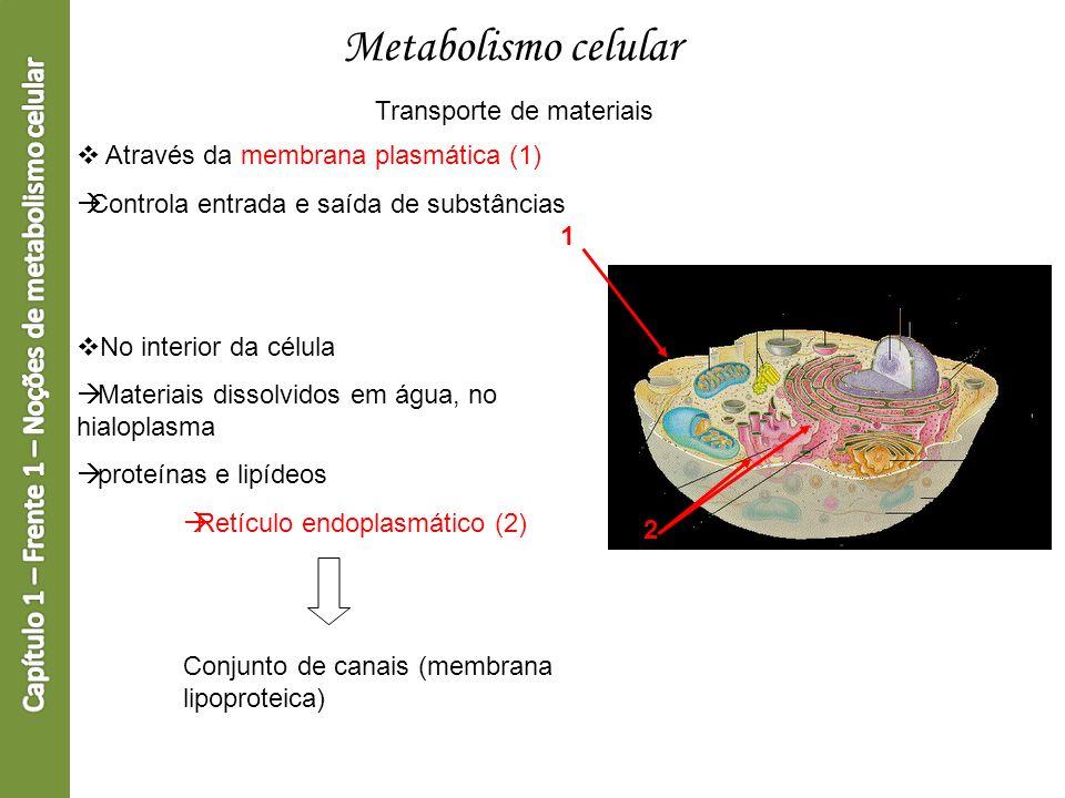 Metabolismo celular Transporte de materiais Através da membrana plasmática (1) Controla entrada e saída de substâncias No interior da célula Materiais
