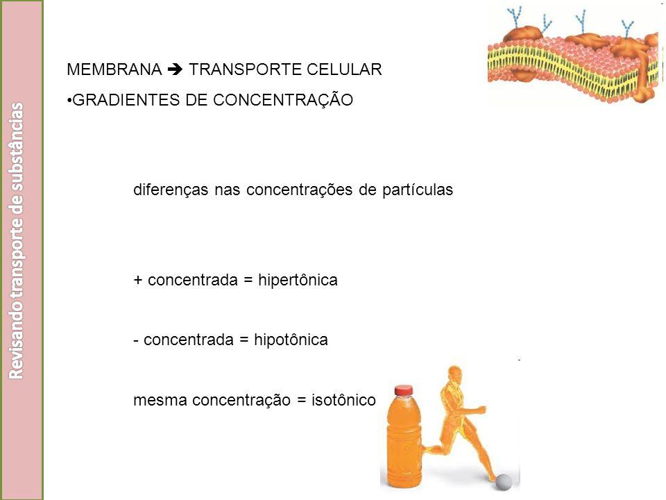 MEMBRANA TRANSPORTE CELULAR GRADIENTES DE CONCENTRAÇÃO diferenças nas concentrações de partículas + concentrada = hipertônica - concentrada = hipotôni