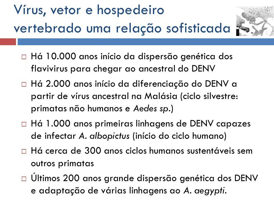 Há 10.000 anos início da dispersão genética dos flavivirus para chegar ao ancestral do DENV Há 2.000 anos início da diferenciação do DENV a partir de