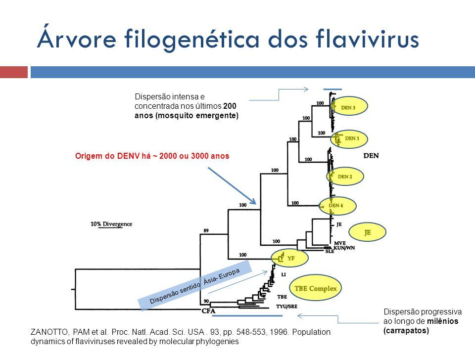 Árvore filogenética dos flavivirus ZANOTTO, PAM et al. Proc. Natl. Acad. Sci. USA. 93, pp. 548-553, 1996. Population dynamics of flaviviruses revealed