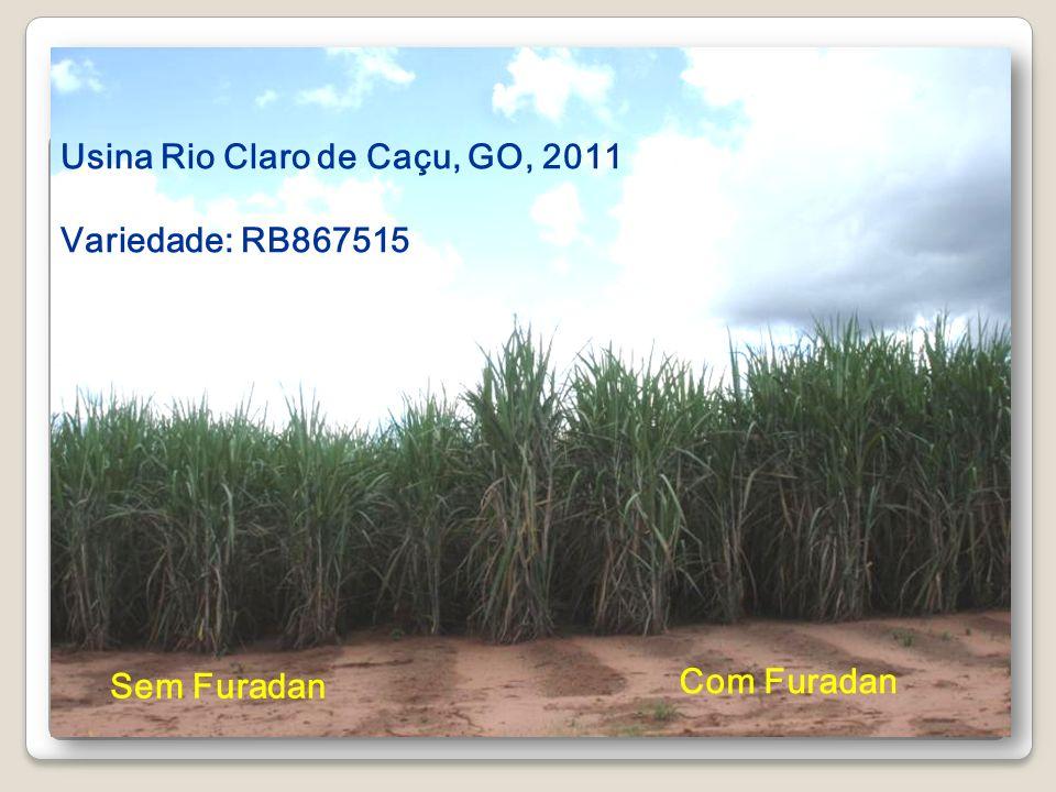 Sem Furadan Com Furadan Usina Rio Claro de Caçu, GO, 2011 Variedade: RB867515