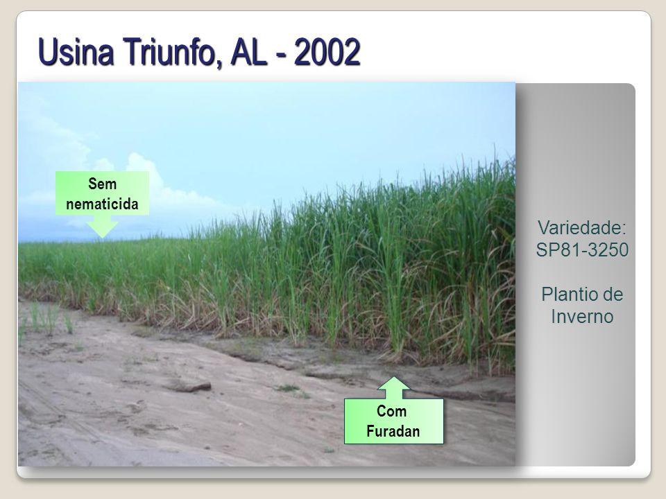 Usina Triunfo, AL - 2002 Variedade: SP81-3250 Plantio de Inverno Com Furadan Com Furadan Sem nematicida