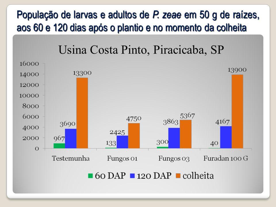 População de larvas e adultos de P. zeae em 50 g de raízes, aos 60 e 120 dias após o plantio e no momento da colheita Usina Costa Pinto, Piracicaba, S