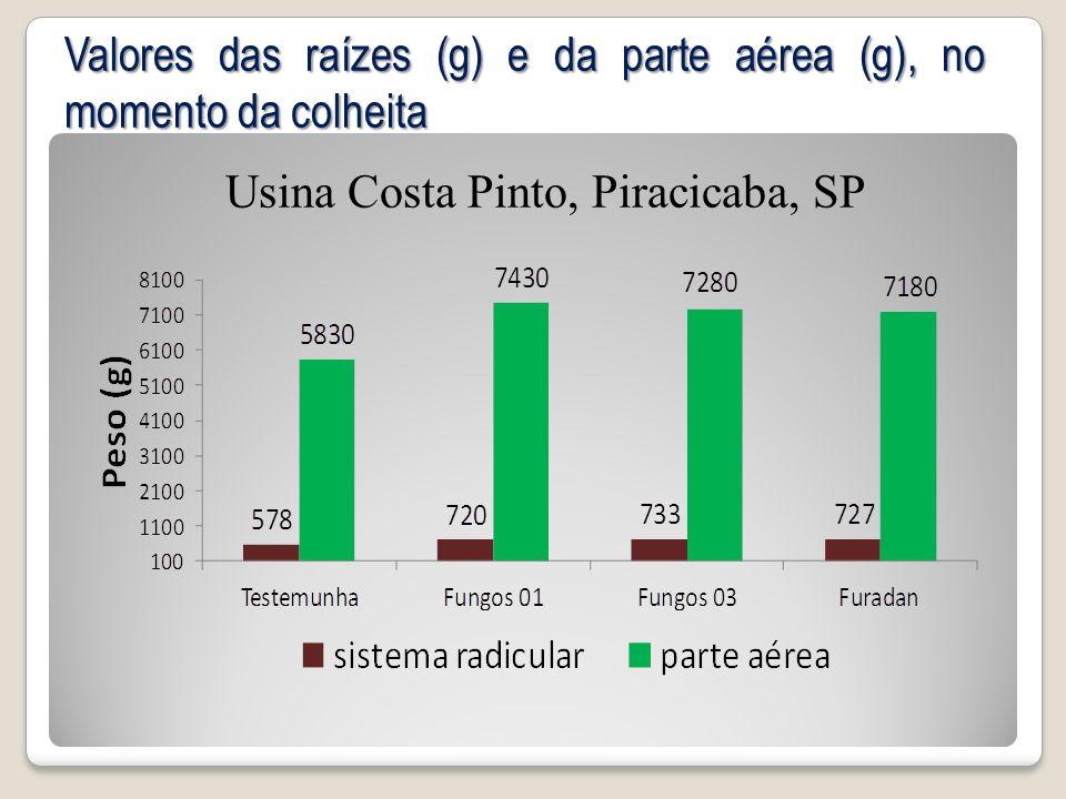 Valores das raízes (g) e da parte aérea (g), no momento da colheita Usina Costa Pinto, Piracicaba, SP