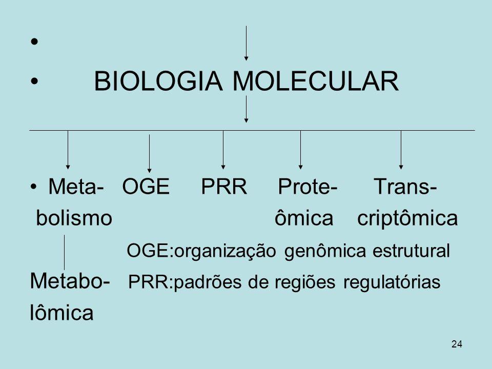 24 BIOLOGIA MOLECULAR Meta- OGE PRR Prote- Trans- bolismo ômica criptômica OGE:organização genômica estrutural Metabo- PRR:padrões de regiões regulató