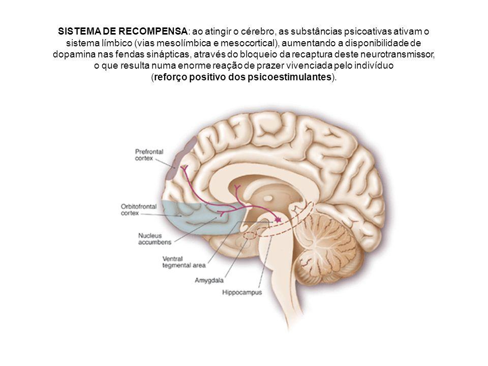 SISTEMA DE RECOMPENSA: ao atingir o cérebro, as substâncias psicoativas ativam o sistema límbico (vias mesolímbica e mesocortical), aumentando a dispo