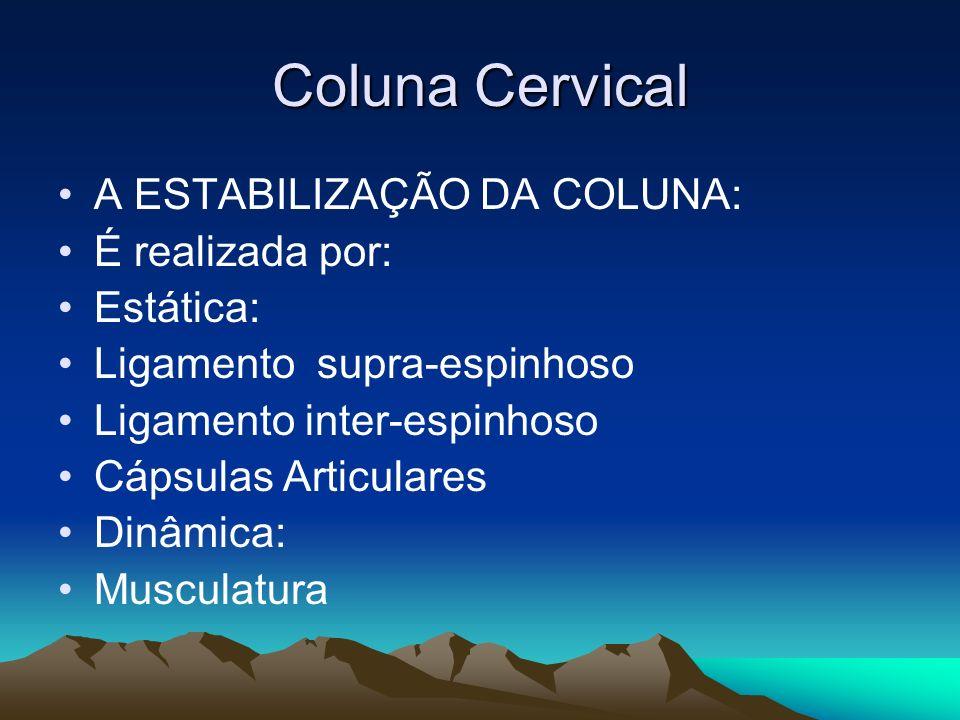 Coluna Cervical A ESTABILIZAÇÃO DA COLUNA: É realizada por: Estática: Ligamento supra-espinhoso Ligamento inter-espinhoso Cápsulas Articulares Dinâmic