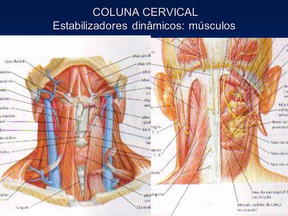 COLUNA CERVICAL Estabilizadores dinâmicos: músculos COLUNA CERVICAL Estabilizadores dinâmicos: músculos