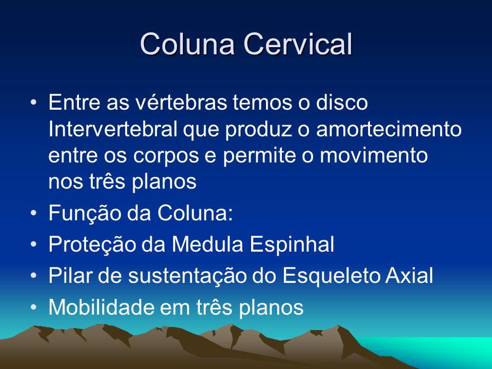 Coluna Cervical Entre as vértebras temos o disco Intervertebral que produz o amortecimento entre os corpos e permite o movimento nos três planos Funçã