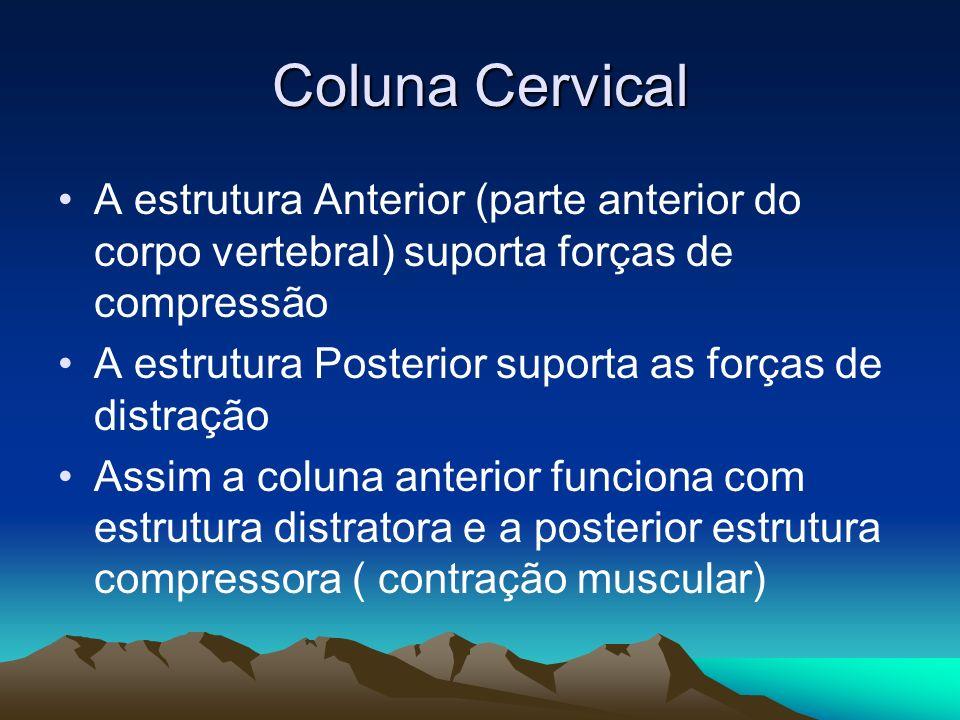 Coluna Cervical A estrutura Anterior (parte anterior do corpo vertebral) suporta forças de compressão A estrutura Posterior suporta as forças de distr