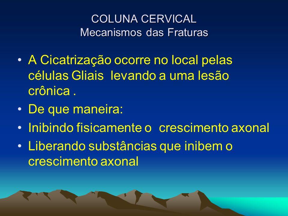 COLUNA CERVICAL Mecanismos das Fraturas A Cicatrização ocorre no local pelas células Gliais levando a uma lesão crônica. De que maneira: Inibindo fisi