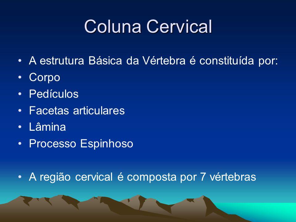 Coluna Cervical A estrutura Básica da Vértebra é constituída por: Corpo Pedículos Facetas articulares Lâmina Processo Espinhoso A região cervical é co