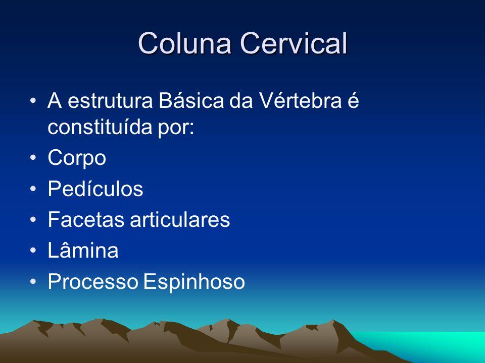 Coluna Cervical A estrutura Básica da Vértebra é constituída por: Corpo Pedículos Facetas articulares Lâmina Processo Espinhoso