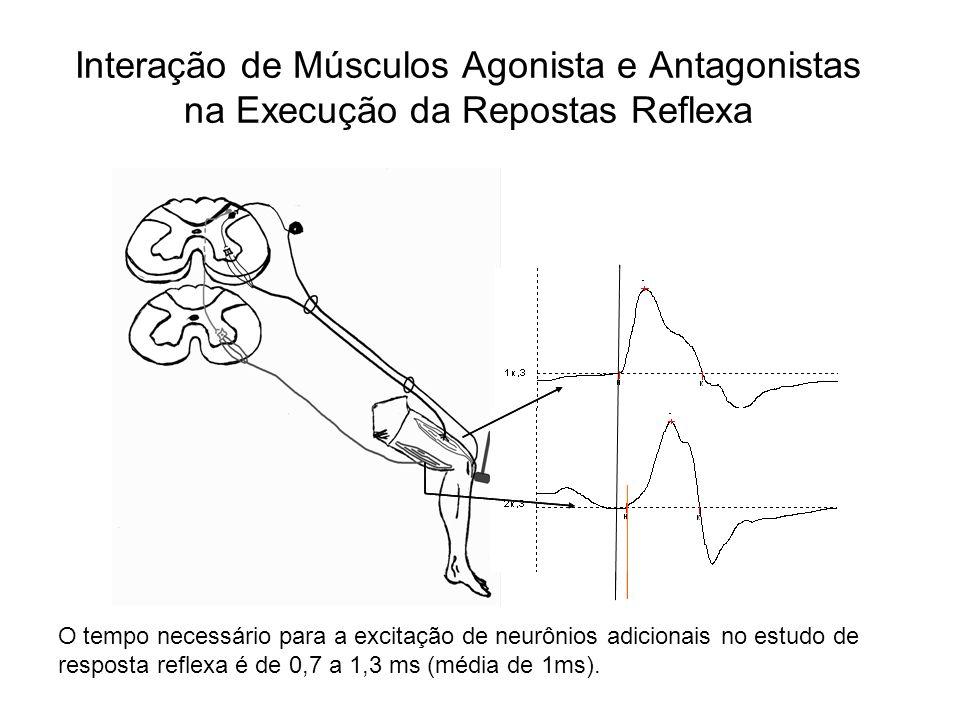 Interação de Músculos Agonista e Antagonistas na Execução da Repostas Reflexa O tempo necessário para a excitação de neurônios adicionais no estudo de