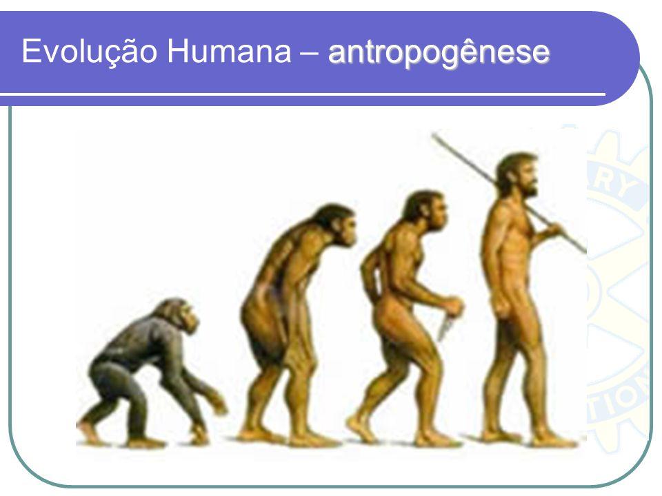 antropogênese Evolução Humana – antropogênese
