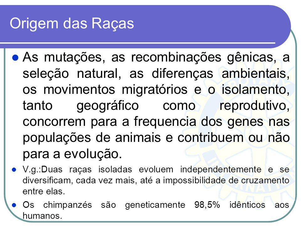Origem das Raças As mutações, as recombinações gênicas, a seleção natural, as diferenças ambientais, os movimentos migratórios e o isolamento, tanto g