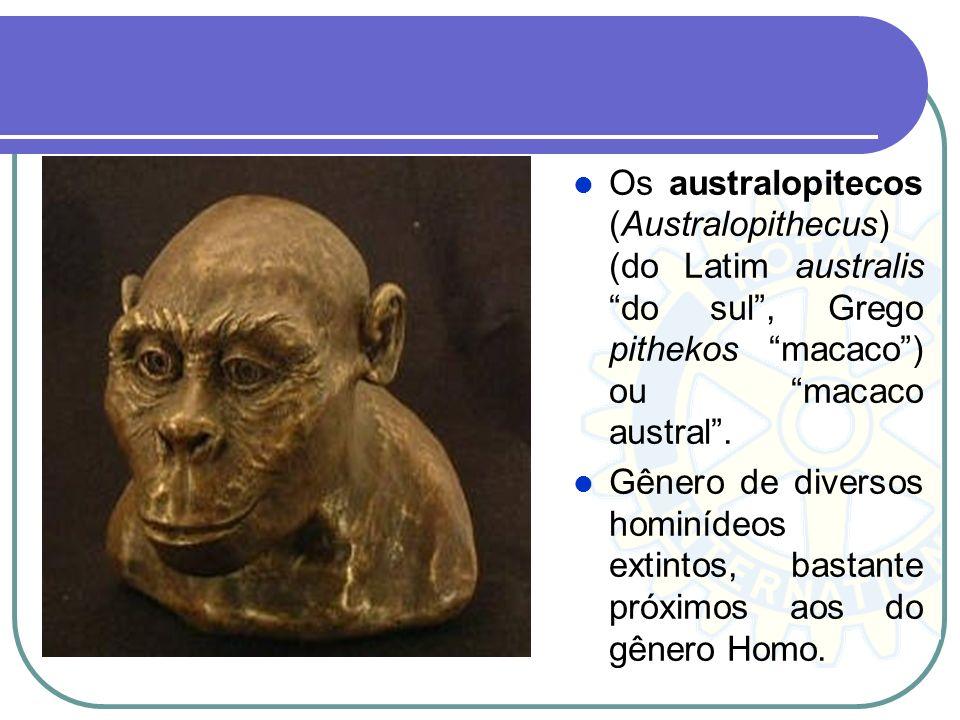 Os australopitecos (Australopithecus) (do Latim australis do sul, Grego pithekos macaco) ou macaco austral. Gênero de diversos hominídeos extintos, ba