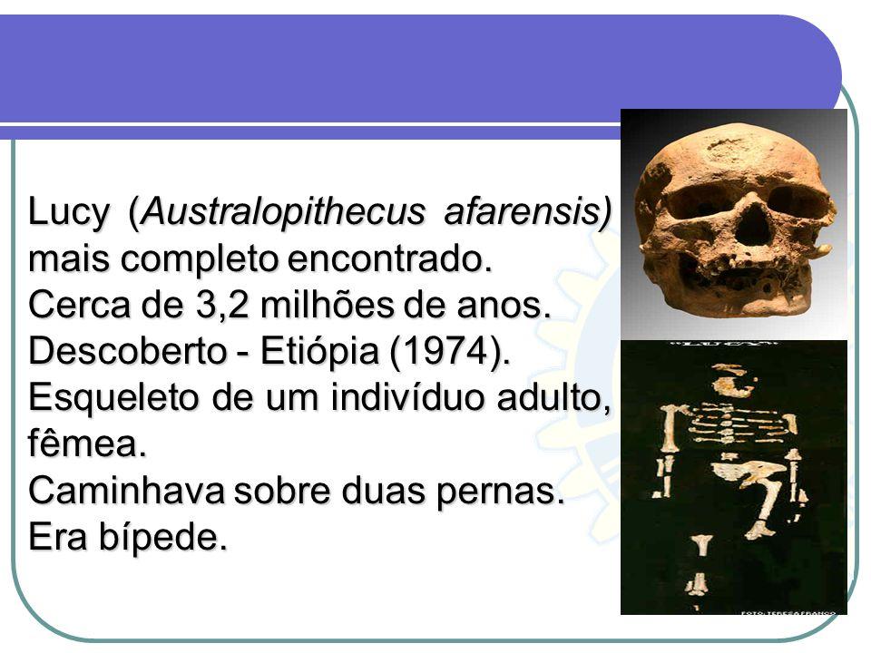 Lucy (Australopithecus afarensis) mais completo encontrado. Cerca de 3,2 milhões de anos. Descoberto - Etiópia (1974). Esqueleto de um indivíduo adult