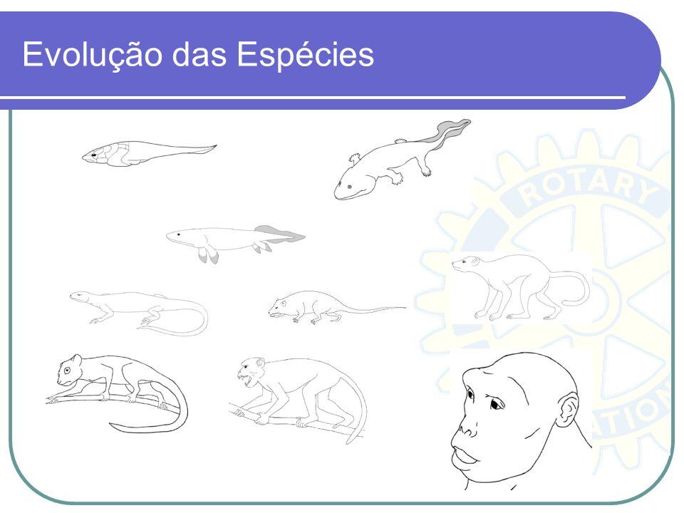 Evolução das Espécies