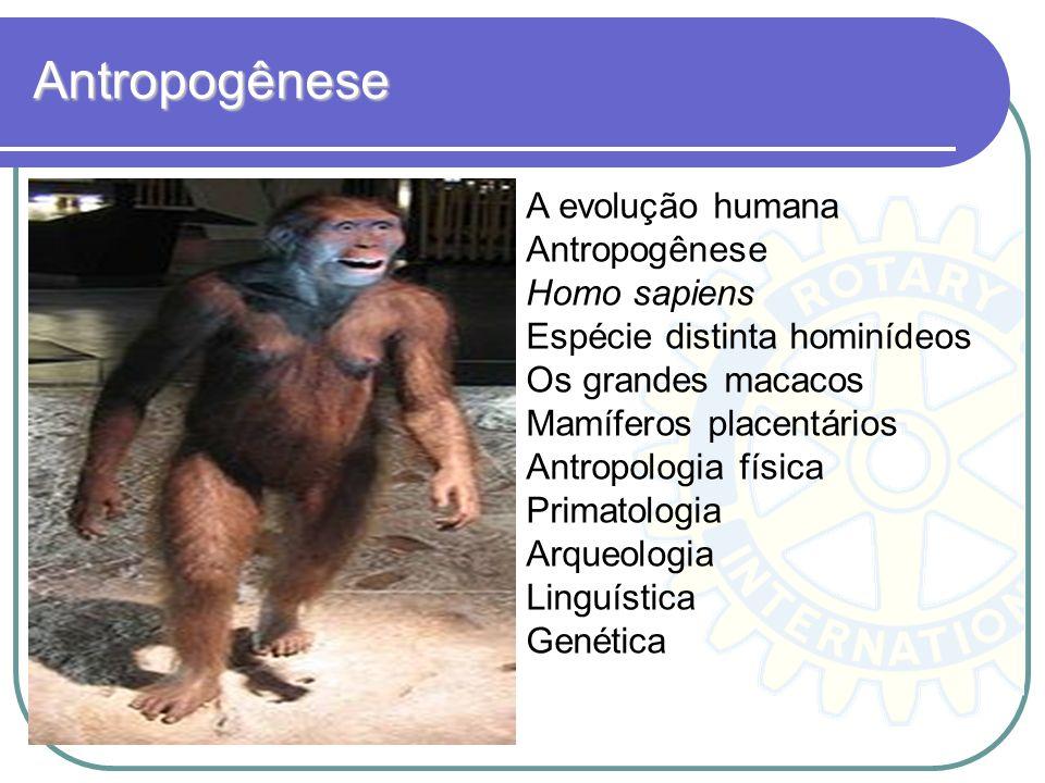 Antropogênese A evolução humana Antropogênese Homo sapiens Espécie distinta hominídeos Os grandes macacos Mamíferos placentários Antropologia física P