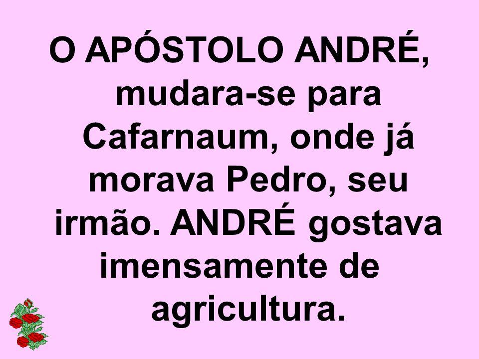 O APÓSTOLO ANDRÉ, mudara-se para Cafarnaum, onde já morava Pedro, seu irmão. ANDRÉ gostava imensamente de agricultura.