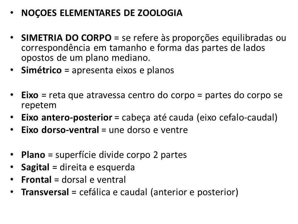 NOÇOES ELEMENTARES DE ZOOLOGIA SIMETRIA DO CORPO = se refere às proporções equilibradas ou correspondência em tamanho e forma das partes de lados opos