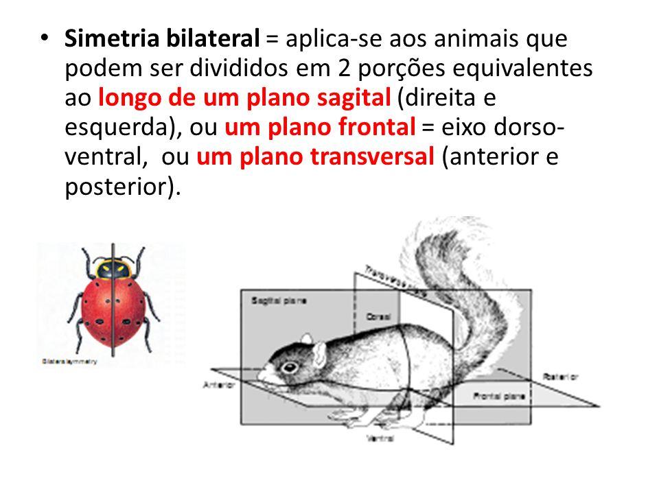 Simetria bilateral = aplica-se aos animais que podem ser divididos em 2 porções equivalentes ao longo de um plano sagital (direita e esquerda), ou um