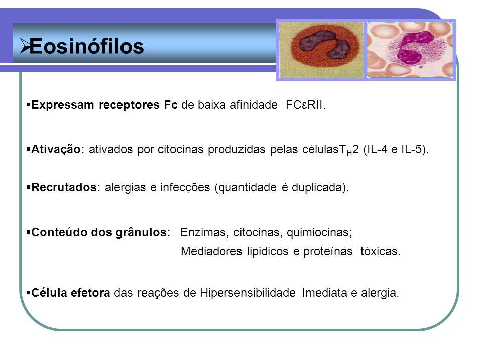Eosinófilos Expressam receptores Fc de baixa afinidade FCεRII. Ativação: ativados por citocinas produzidas pelas célulasT H 2 (IL-4 e IL-5). Recrutado
