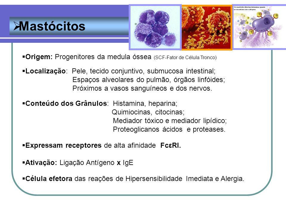 Mastócitos Origem: Progenitores da medula óssea (SCF-Fator de Célula Tronco) Localização: Pele, tecido conjuntivo, submucosa intestinal; Espaços alveo