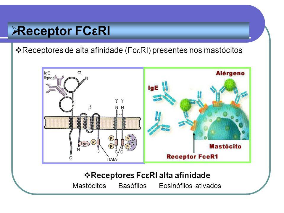 Receptor FCεRI Receptores FcεRI alta afinidade Mastócitos Basófilos Eosinófilos ativados Receptores de alta afinidade (Fc RI) presentes nos mastócitos
