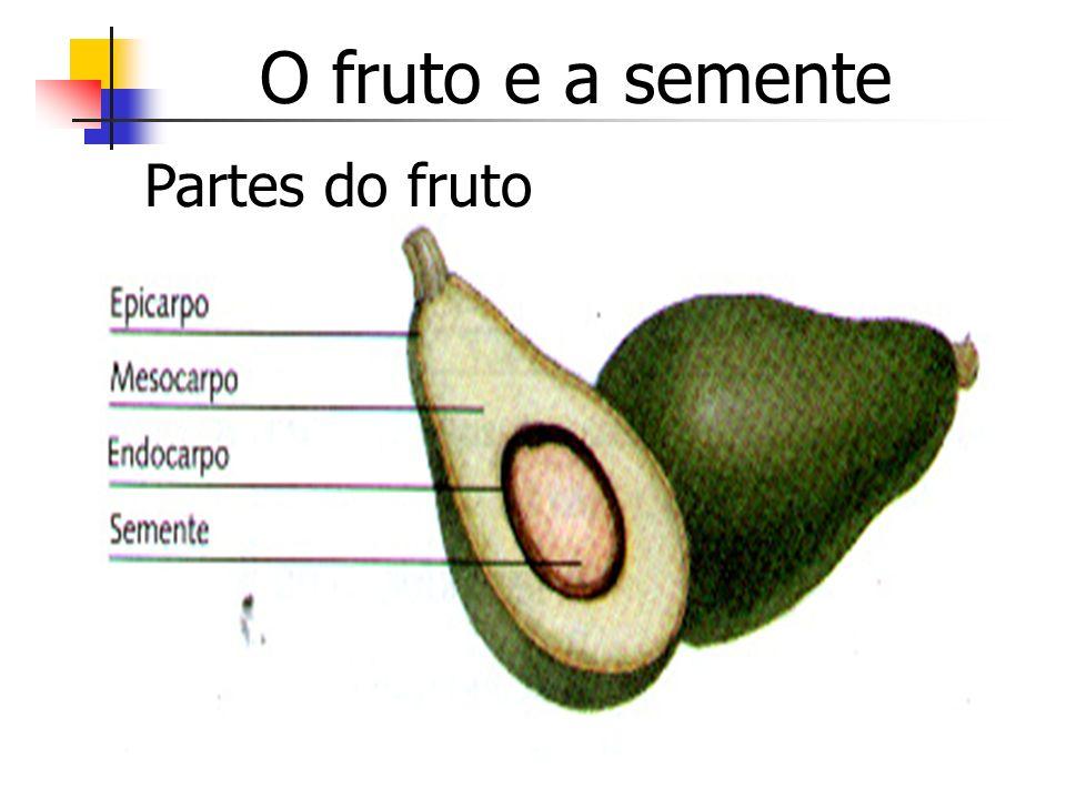 O fruto e a semente Partes do fruto