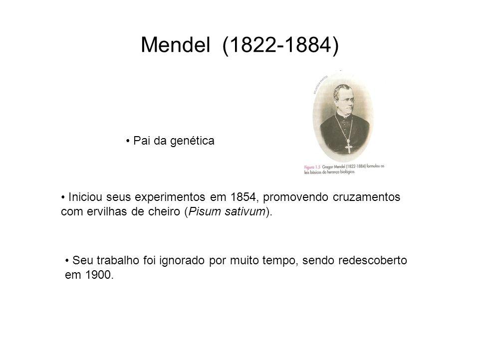 Mendel (1822-1884) Pai da genética Iniciou seus experimentos em 1854, promovendo cruzamentos com ervilhas de cheiro (Pisum sativum). Seu trabalho foi