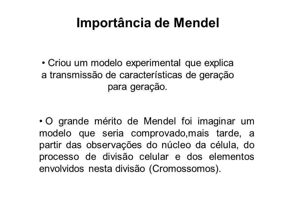 Importância de Mendel Criou um modelo experimental que explica a transmissão de características de geração para geração. O grande mérito de Mendel foi