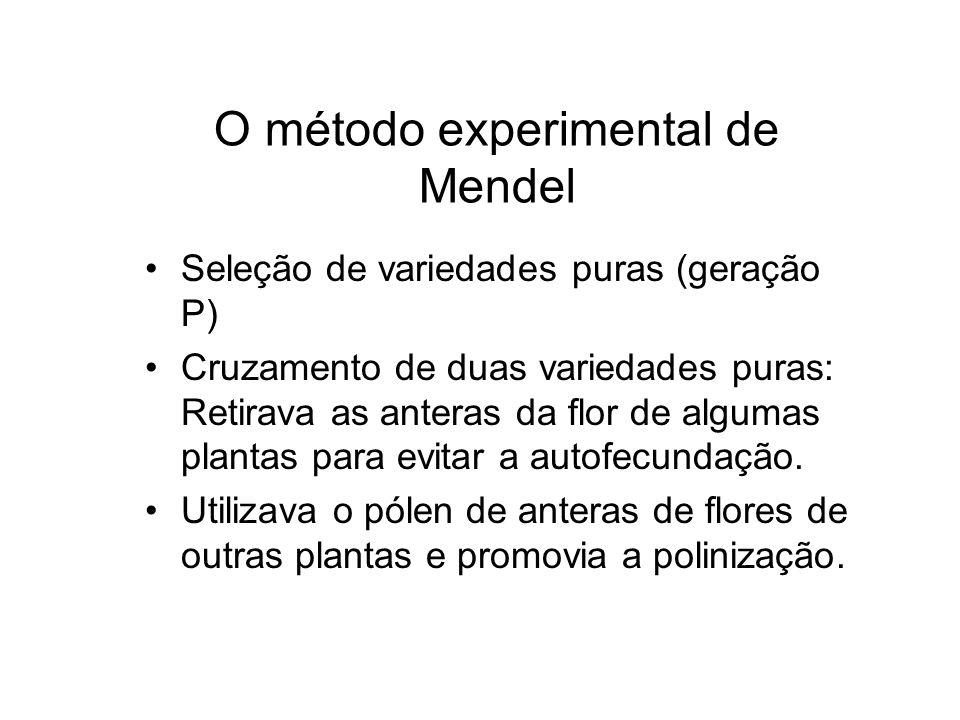 O método experimental de Mendel Seleção de variedades puras (geração P) Cruzamento de duas variedades puras: Retirava as anteras da flor de algumas pl