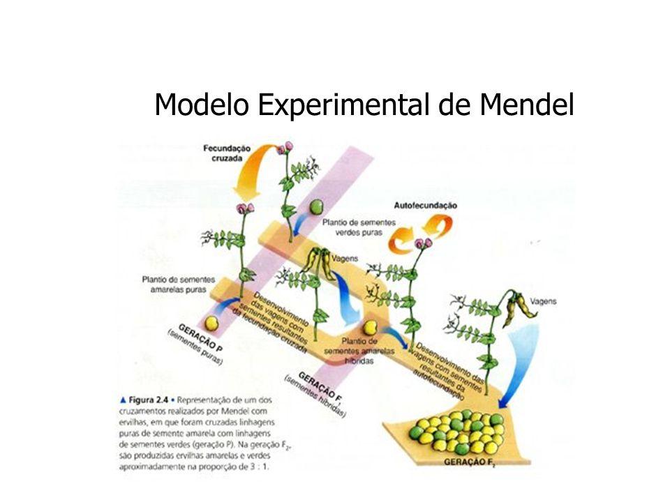 Modelo Experimental de Mendel