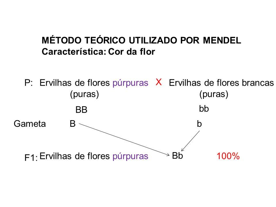 MÉTODO TEÓRICO UTILIZADO POR MENDEL Característica: Cor da flor Ervilhas de flores púrpuras (puras) Ervilhas de flores brancas (puras) X P: Ervilhas d