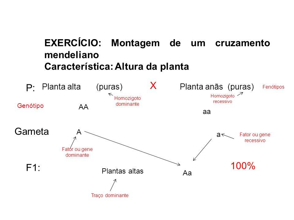EXERCÍCIO: Montagem de um cruzamento mendeliano Característica: Altura da planta Planta alta (puras)Planta anãs (puras) X P: 100% F1: Gameta Genótipo