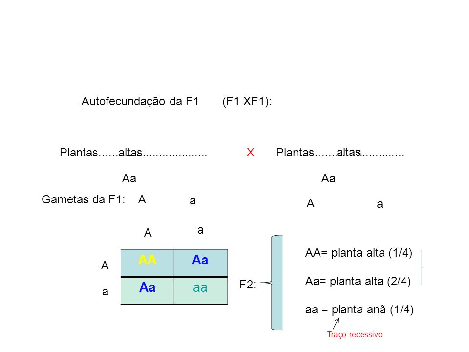 F2: X Gametas da F1: Autofecundação da F1 (F1 XF1): Plantas.................................Plantas........................... AAAa aa altas Aa A a A