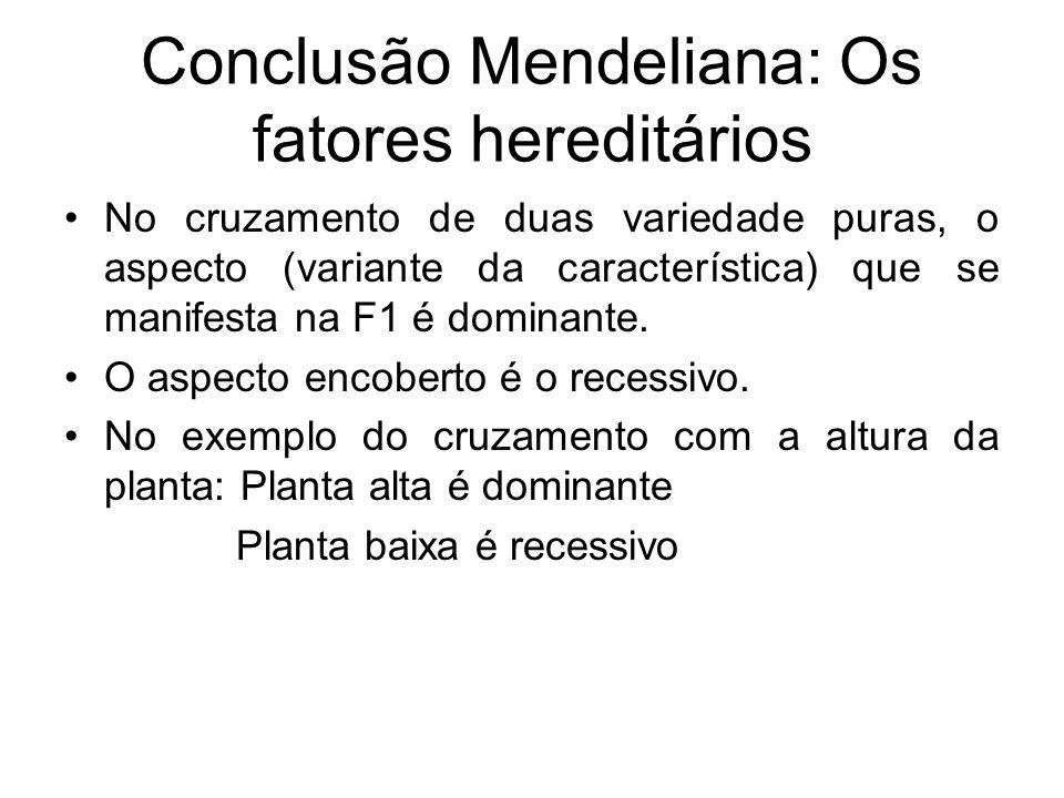 Conclusão Mendeliana: Os fatores hereditários No cruzamento de duas variedade puras, o aspecto (variante da característica) que se manifesta na F1 é d