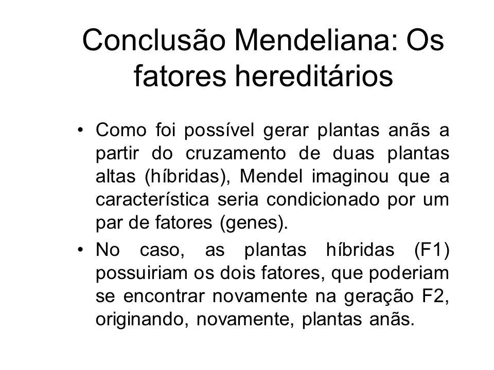 Conclusão Mendeliana: Os fatores hereditários Como foi possível gerar plantas anãs a partir do cruzamento de duas plantas altas (híbridas), Mendel ima