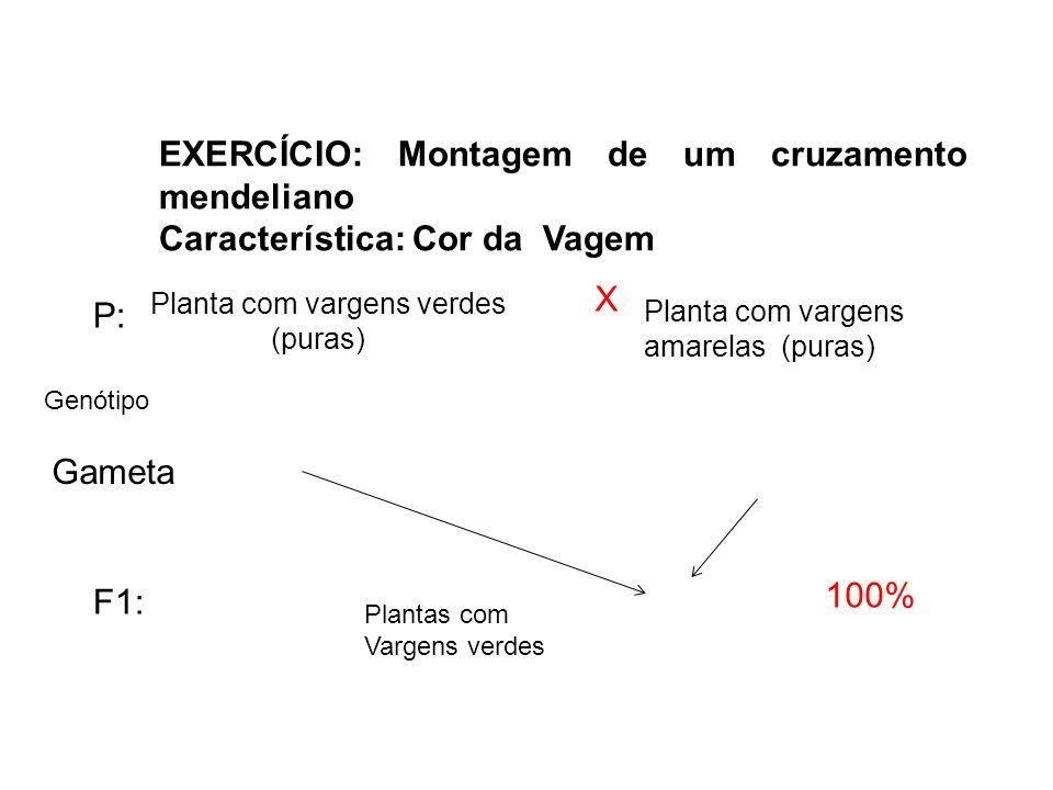 EXERCÍCIO: Montagem de um cruzamento mendeliano Característica: Cor da Vagem Planta com vargens verdes (puras) Planta com vargens amarelas (puras) X P