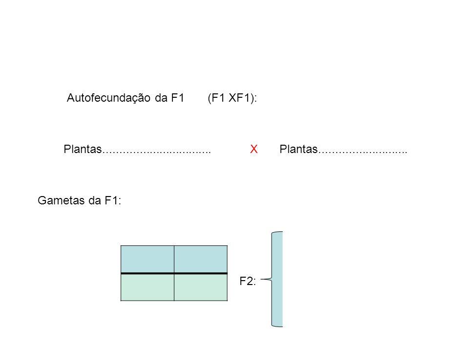 F2: X Gametas da F1: Autofecundação da F1 (F1 XF1): Plantas.................................Plantas...........................