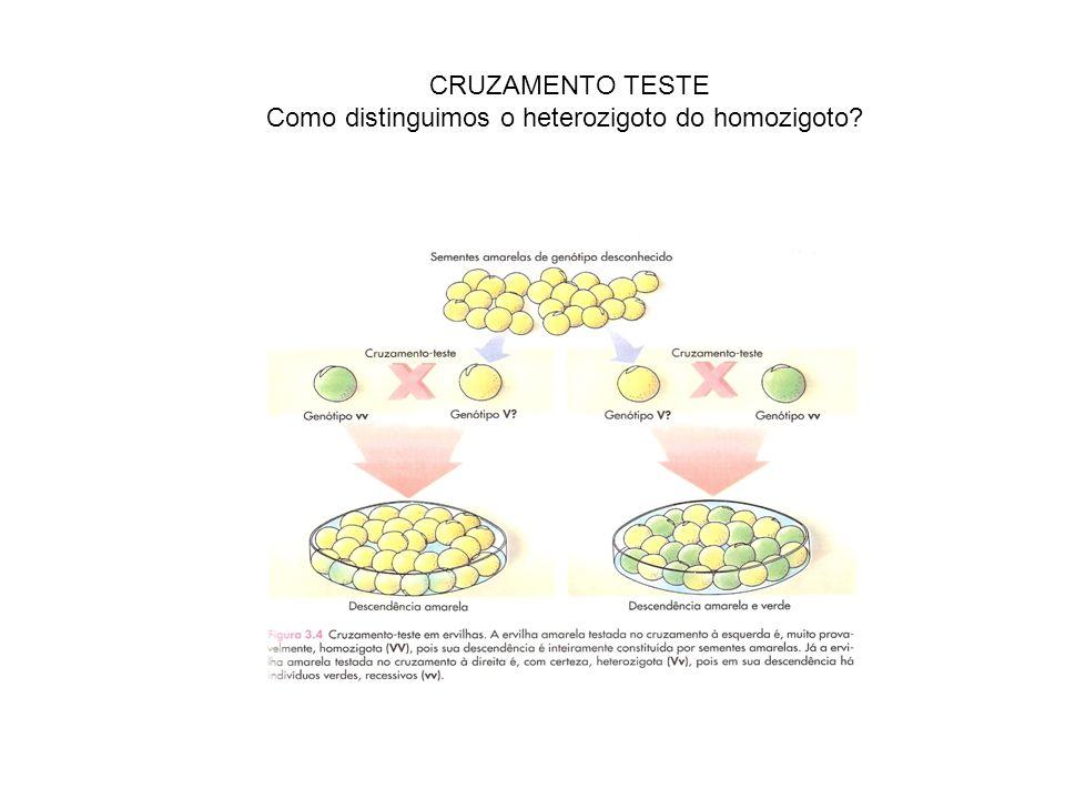 CRUZAMENTO TESTE Como distinguimos o heterozigoto do homozigoto?